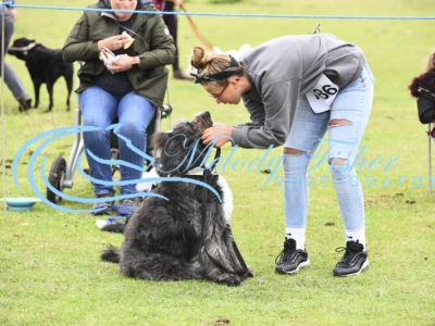 EHPPS Dog Show – 28/07/19